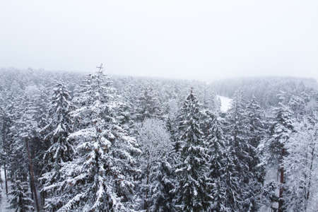 Aerial view of winter forest with snowy trees. Winter nature, aerial landscape, trees covered white snow, top view