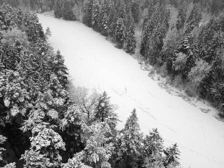 Aerial view of frozen river in winter forest with snowy trees. Winter nature, aerial landscape with river and trees covered white snow. Black and white photography