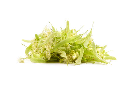 Linden flowers isolated on white background. Heap of fresh tilia flowers