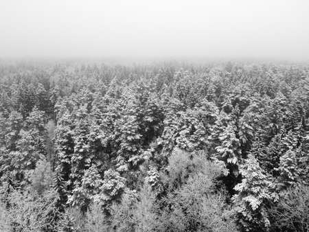 Winter forest with snowy trees, aerial view. Winter nature, aerial landscape, trees covered white snow. Black and white photography