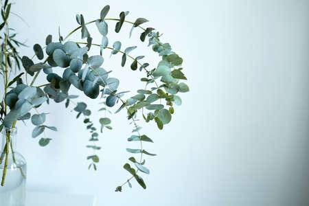 Eucalyptus branch in glass bottle on white wall background. Fresh green eucalyptus leaves, interior decor Standard-Bild