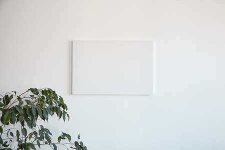 Canvas mockup hanging on white wall and green leaves of houseplant. Blank artistic canvas
