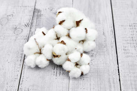 White cotton flowers on gray wooden background. Dry soft cotton plant