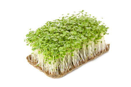 Fresh microgreens isolated on white background. Young arugula shoots, healthy food 免版税图像
