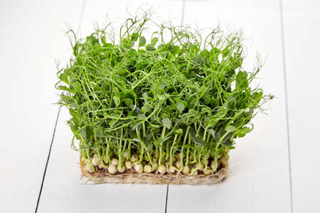 Fresh microgreens on white wooden background. Young pea shoots on table, healthy food