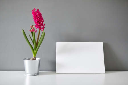 Blank canvas and hyacinth flower on white table on gray wall background 免版税图像