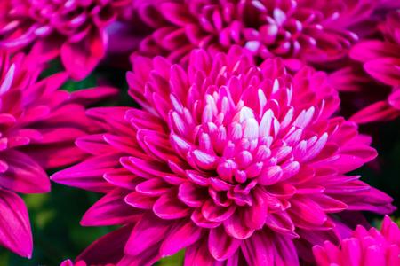 Pink flowers blooming Stock fotó