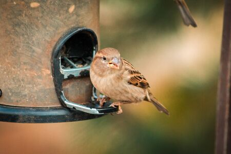 Small brown bird eating out of a bird feeder at the Frederik Meijer Gardens