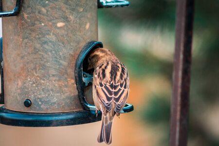 Small brown bird eating out of a bird feeder Stock fotó