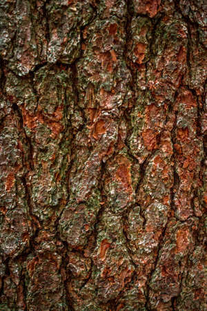 Close up of pine tree bark in the wood