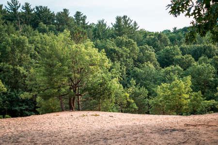 Dune in the middle of Provin trails in Grand Rapids Michigan