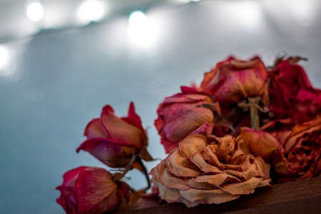 Dried roses on display in a house lit from behind