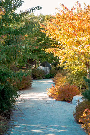 Path through the japanese garden in the fall