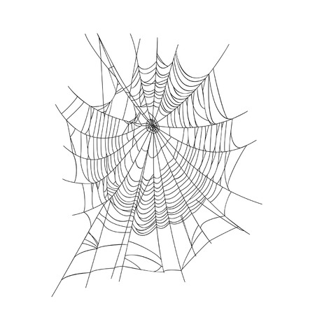Spider web isolated on white background