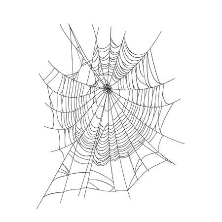Toile d'araignée isolée sur fond blanc Banque d'images - 29264051