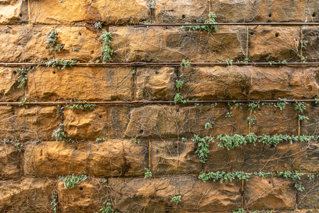 Block Wall and Ivy