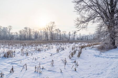 Sunrise over Snowy Fields Stockfoto