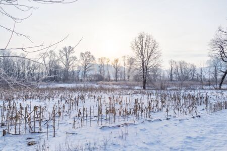 Trees and Fields in Winter Stockfoto
