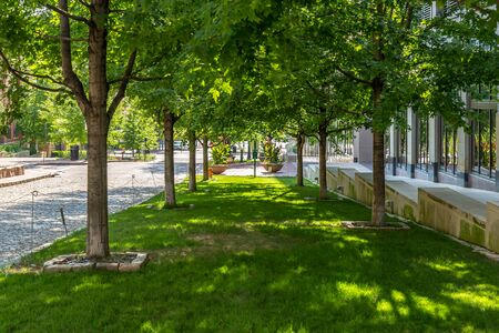 Lush Grass between two rows of trees in a Park Stockfoto