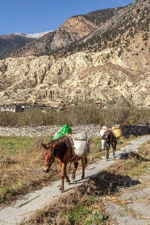 Pack horses in Marpha Nepal Stockfoto
