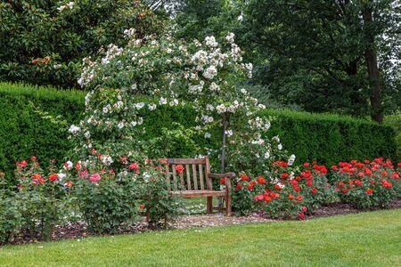 Bench in Rose Arbor