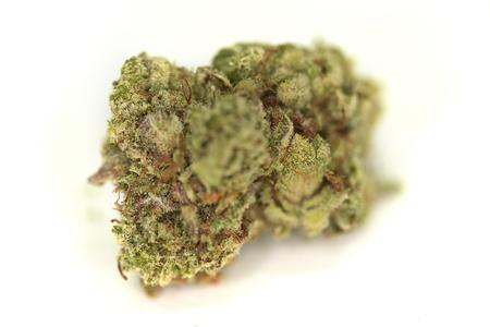 Isolated Super Glue Marijuana Bud