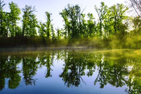 Lake in a spring forest. Sunny day, blue sky.