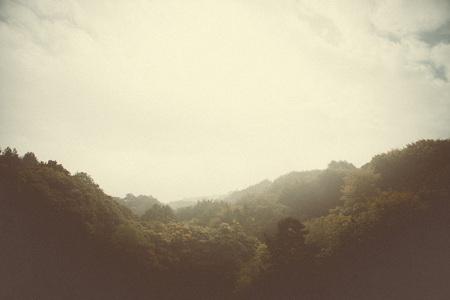 abstrait: boisés images de style de arbres et la nature