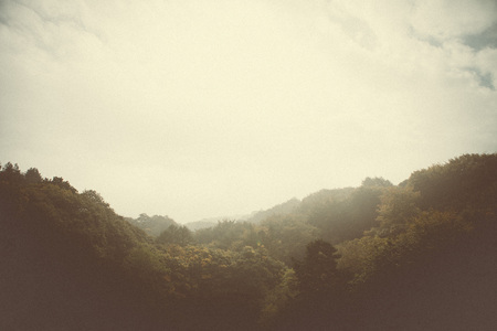 abstrakt: Wald Stil Bilder von Bäumen und Natur Lizenzfreie Bilder