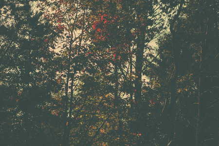 nature backgrounds: A retro style forest image