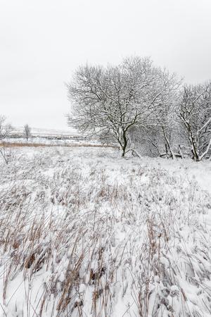 A snowy winter landscape scene