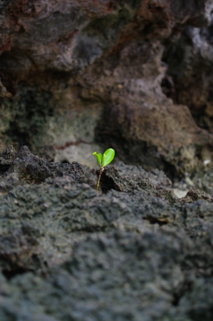 Young tree growing up on the mangrove sight in Krabi Stock Photo