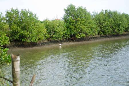 mangrove sight in Thailand Stock Photo