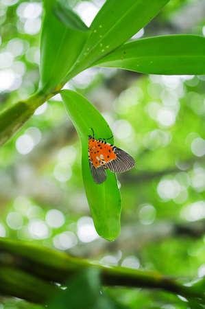 Orange butterfly under orchid leaf