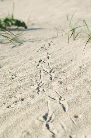 Bird footprint on the sand Stock Photo