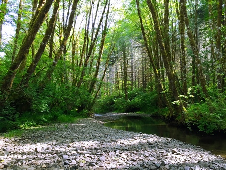 Creek bed in a sunlit forest in Northwest Oregon Stock Photo