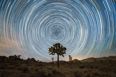 Joshua Tree Under the North Star