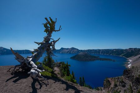 Beautiful scenic view of Crater Lake and Wizard Island with an old ancient white bark pine tree Stock fotó
