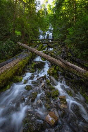 Rushing water and fallen trees at Upper Proxy Falls in Oregon. Stock fotó