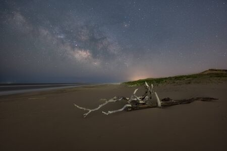Driftwood on the beach under the milky way galaxy