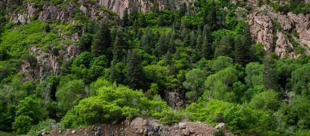 Panorama of lush green trees and granite rock.