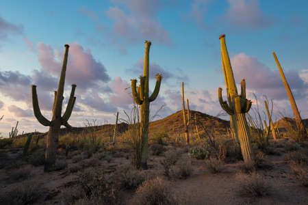 Saguaro National Park desert sunset near Tuscon Arizona Stock fotó