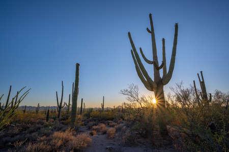 Desert Discovery Nature Trail sunburst sunset near Tuscon Arizona