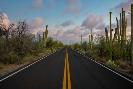 Beautiful Saguaro cactus along Kinney Road at sunset in Arizona Stock fotó