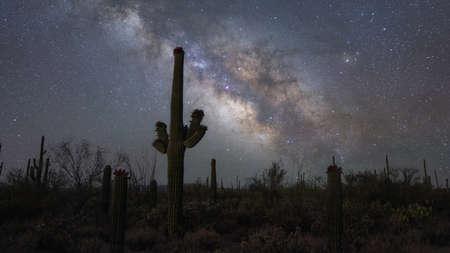 Silhouette of cactus near Saguaro National Park in Arizona Stock fotó