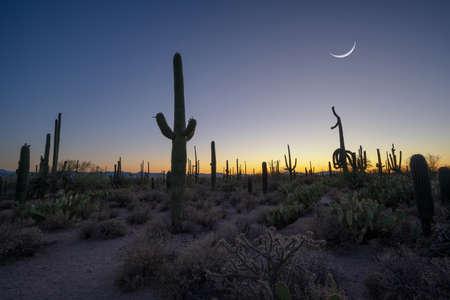Blue hour in the desert near Saguaro National Park Arizona Stock fotó