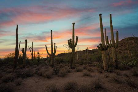 Beautiful sunset near Tuscon Arizona of Saguaro Cactus in the desert Stock fotó