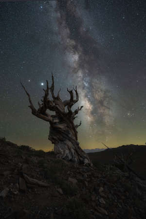 Silhouette of Bristlecone Pine Trees in Bishop California and the Milky Way Galaxy Stock fotó