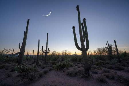 Beautiful moonrise over Saguaro National Park near Tuscon Arizona