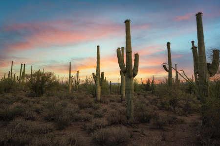 Vibrant sunrise near Tuscon Arizona in Saguaro National Park